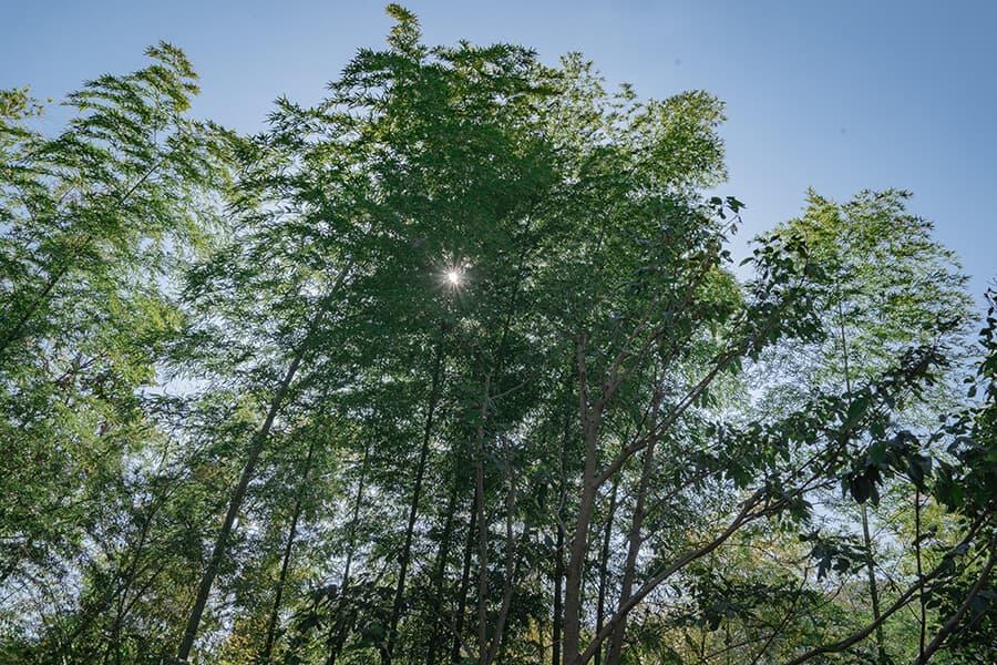 三輪 湯河原|木立のツイン|景色